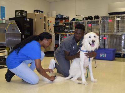 First day of grooming in the Vet Science Lab